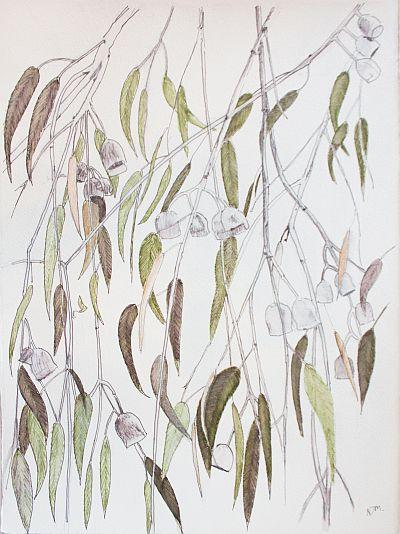 Dressed for Summer Eucapyptus caesia II Water soluble pen on Paper ©Nada Murphy
