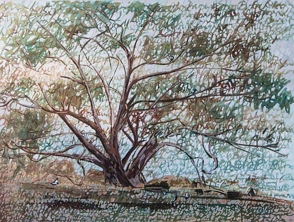 Our Tree Oil on Linen 83 x112 cm ©Nada Murphy