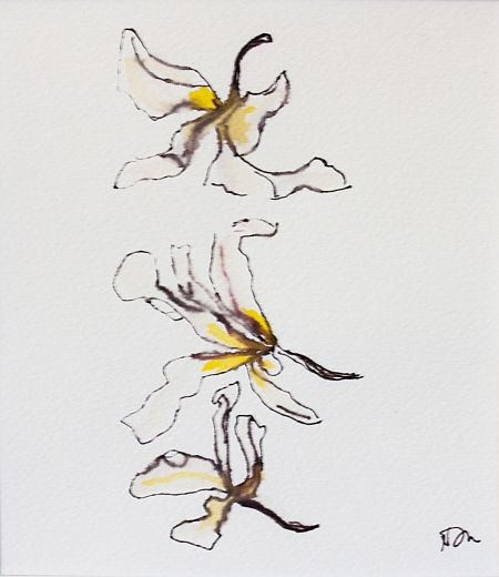 Fallen Fragipani Ii 28x 30 cm Card mount Water soluble pen in Paper ©Nada Murphy