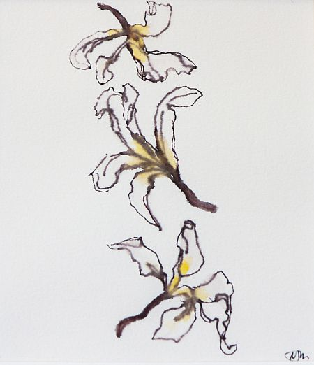 Fallen Fragipani I 28x 30 cm Card mount Water soluble pen in Paper ©Nada Murphy